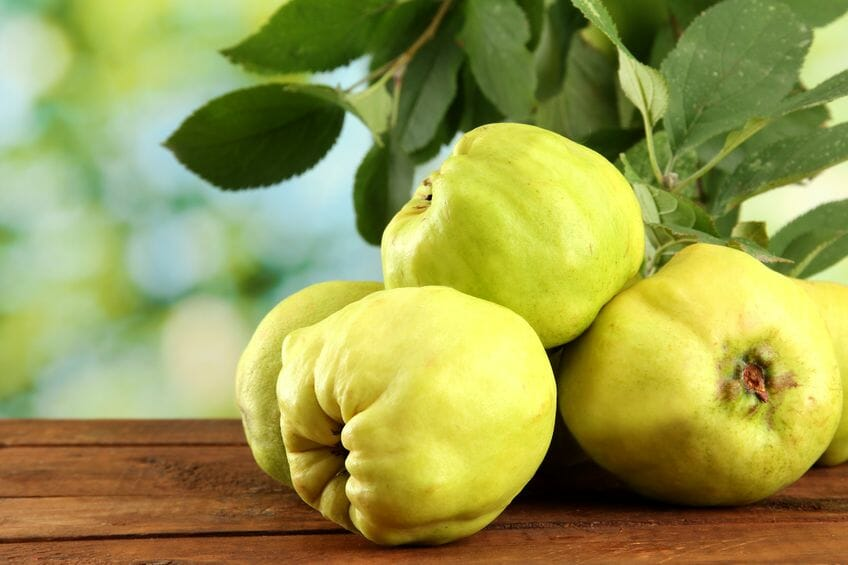 Quince how to use this a powerful fruit and natural remedy - Quince recipes for babies a healthy fall ...