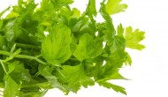 Interesting Facts about Celery – Learn its Benefits and Usage