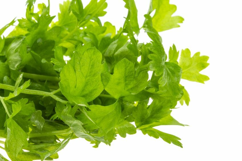 Interesting Facts About Celery
