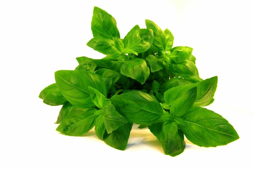 evaluation of the sweet basil Basil essential oil market - global industry analysis,  common or sweet basil  the report offers a comprehensive evaluation of the market.