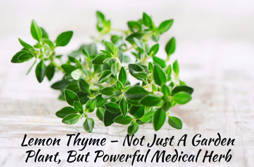 Health Benefits of Lemon Thyme