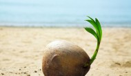 Coconuts And Its Secrets – Part I