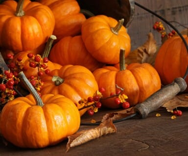 Reasons Why You Should Eat Pumpkins