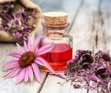 Natural Healing Powers of Echinacea