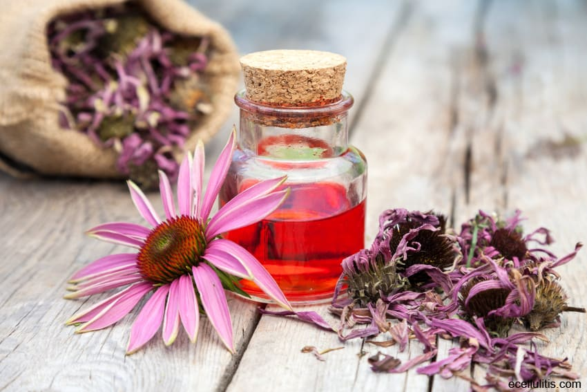 Natural Healing Powers of Echinacea
