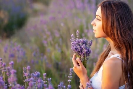 Medical Benefits of Lavender