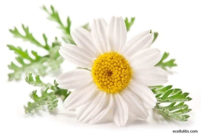 Chamomile – Natural Remedy