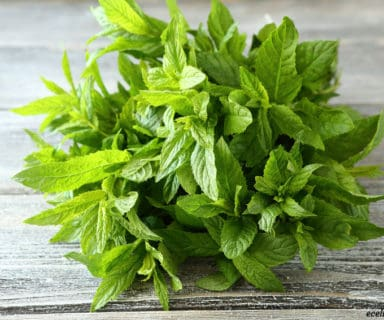 peppermint oil - for common winter health problems