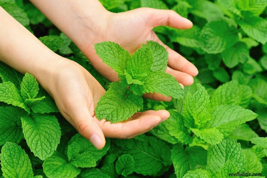 Peppermint and Its Benefits