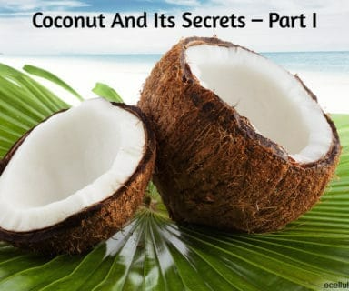 Coconut And Its Secrets – Part I