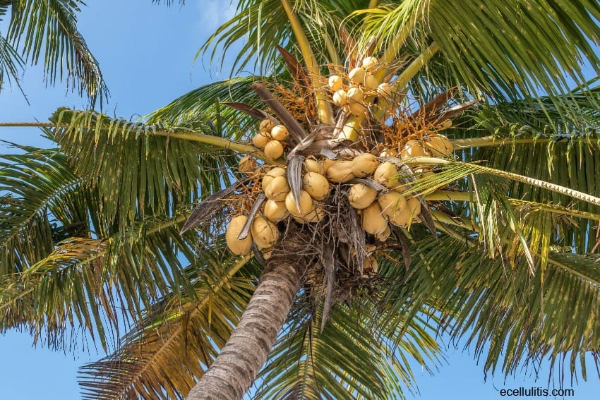 Coconut And Its Secrets