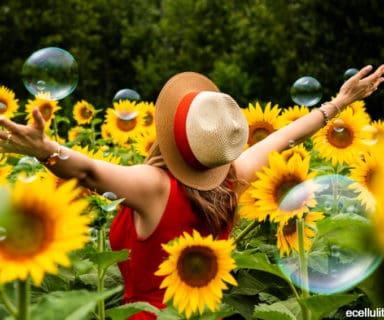 sunflower seeds - benefits