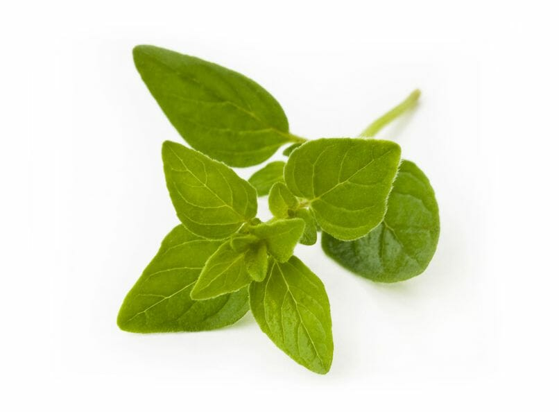 oregano for your health