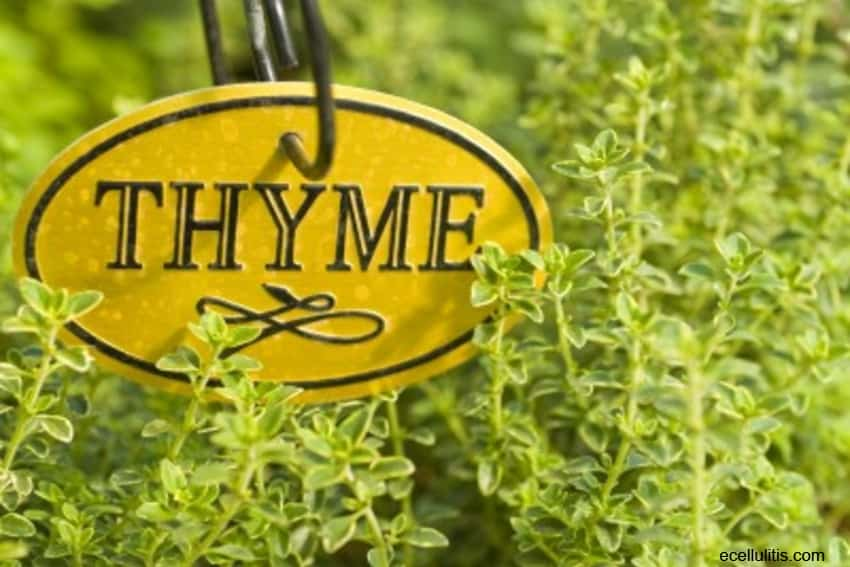 best hair oils - thyme essential oil