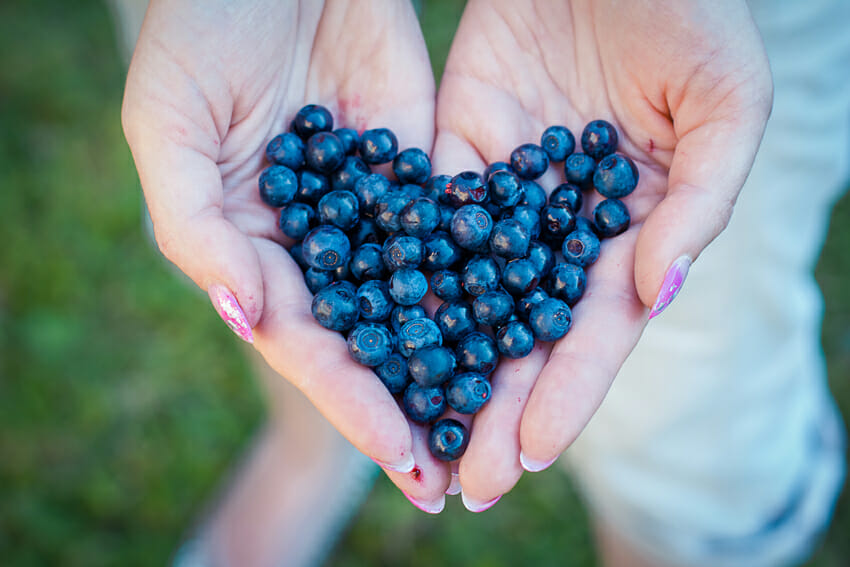 blueberries to slow skin aging - antioxidant food
