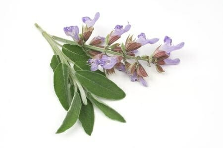 Sage for bruises