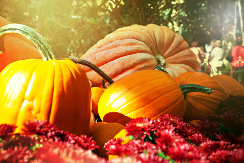 Pumpkins for healthy reproductive system - antioxidants protect reproductive organs