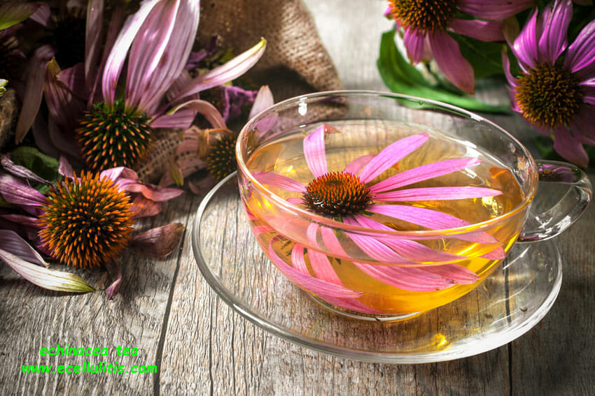 echinacea - health benefits
