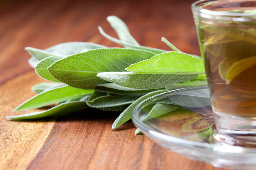 What You Need To Know About Sage Tea Health Benefits?