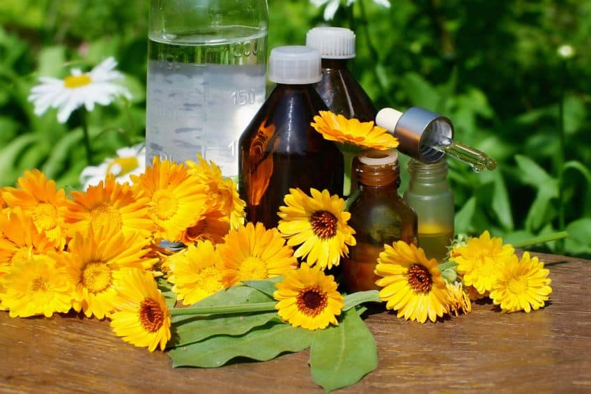 Calendula – Natural Treatment for Cellulitis