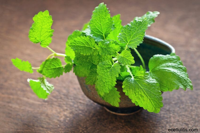 Lemon balm tea benefits