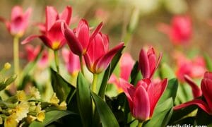 Spring Fatigue: How To Combat Spring Tiredness And Boost The Energy Level