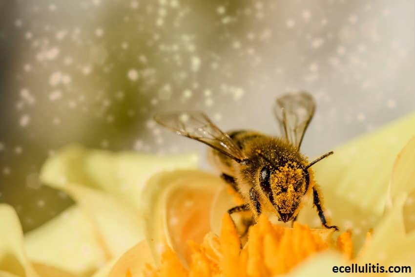 Natural Remedies for Allergies - Bee Pollen