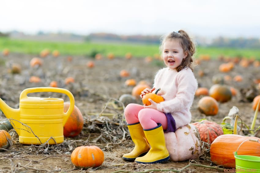 Pumpkins for healthy reproductive system